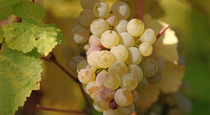 A Resplendent Riesling Wine, Art, Etc.