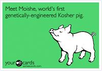 moishe-kosher-pig
