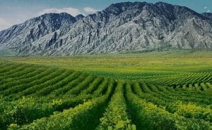 Ningxia-China-wine-vinyards